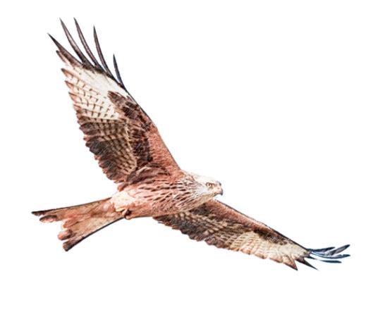 Fauna Aves